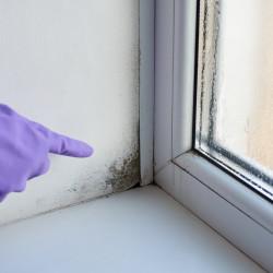 Grzyb i pleśń przy oknach – usuwanie i zapobieganie