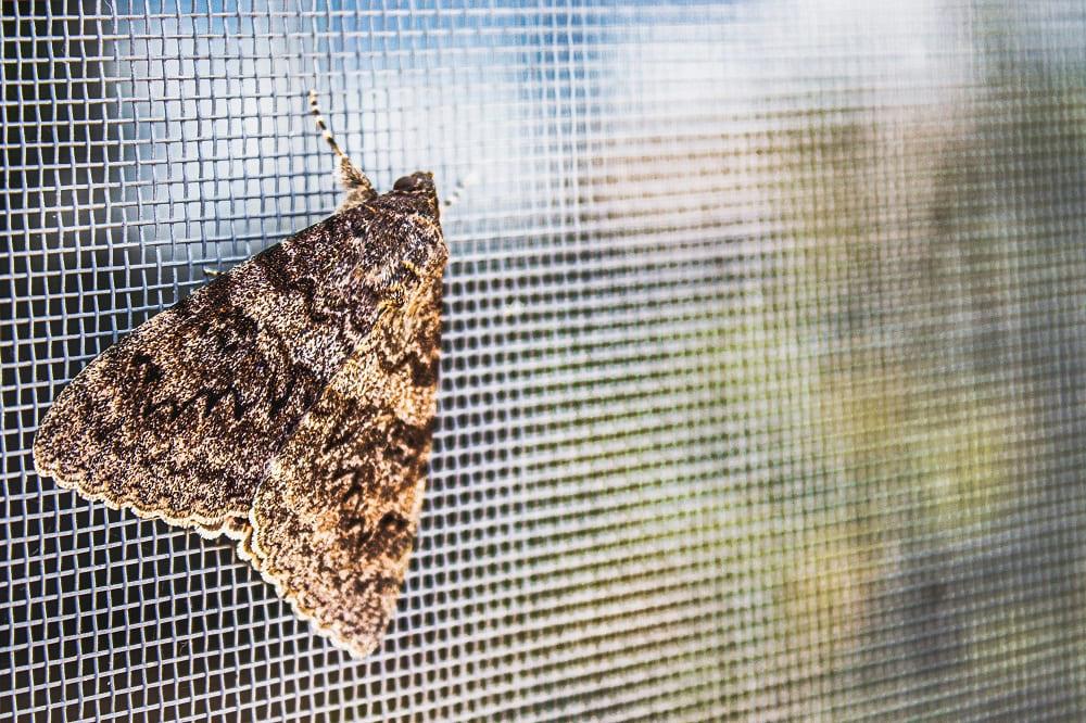 Moskitiery skutecznym sposobem na owady w letnie wieczory